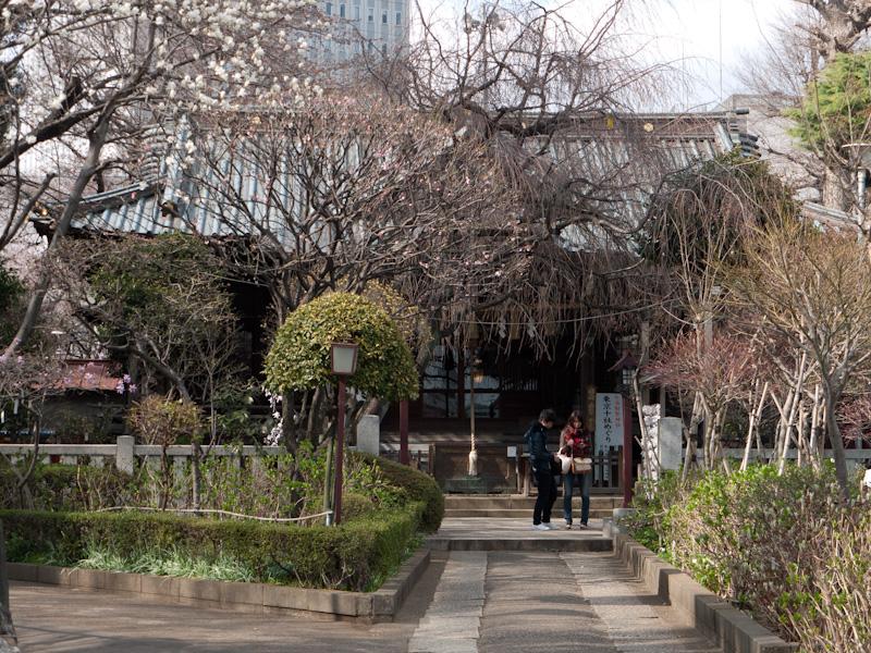 白山神社(春)